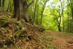 djup skog Royaltyfri Foto