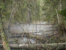 Djup skog Arkivbilder