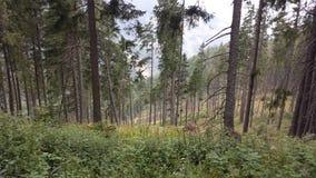 Djup skog Arkivfoto