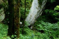 djup skog Royaltyfri Fotografi