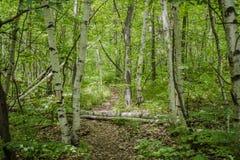 Djup skog Royaltyfria Bilder
