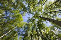 djup skog royaltyfria foton