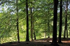 djup skog royaltyfri bild