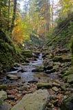 djup skog för höst Royaltyfri Fotografi