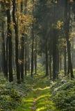 djup skog för höst Royaltyfri Bild