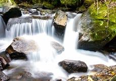 Djup skog för vattenfall Arkivfoto