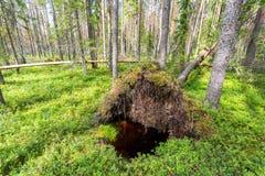Djup skog i sommartid Lös flora och natur Royaltyfria Bilder