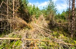 Djup skog i sommartid Lös flora och natur Royaltyfri Fotografi