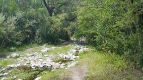 Djup skog med den lilla floden royaltyfri bild