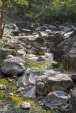 djup skogbergflod Royaltyfria Bilder