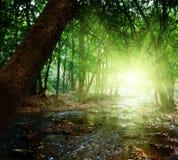 djup skogflod Royaltyfria Bilder