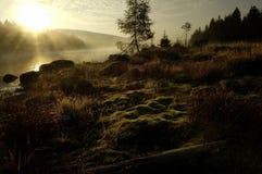 djup skoglake Royaltyfria Bilder