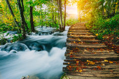 Djup skogström med kristallklart vatten med träpahway Plitvice sjöar, KroatienUNESCO Royaltyfri Fotografi