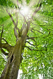 djup skogsun Royaltyfri Fotografi