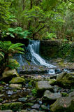 djup skogvattenfall Royaltyfria Foton