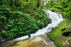 djup skogvattenfall Arkivbild