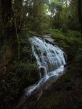 Djup skogvattenfall på evergreen royaltyfri fotografi
