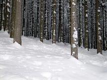 djup skogvinter Arkivfoto