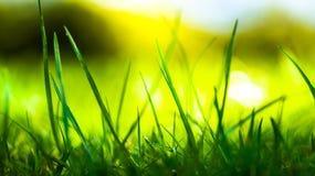 Djup syn av grönt gräs Fotografering för Bildbyråer