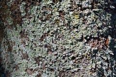 Djup textur och färg av det åldriga trädskället fotografering för bildbyråer
