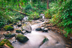 Djup trä och liten vik av siriphumvattenfall en av de berömda vattenfallen Royaltyfri Bild