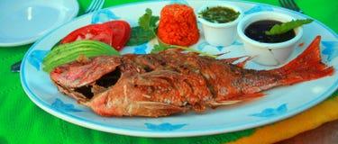 Djupa Fried Red Snapper med avokadotomatoeris och svarta svarta bönor Royaltyfri Bild