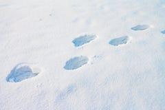Djupa mänskliga fotspår i snö Royaltyfri Fotografi