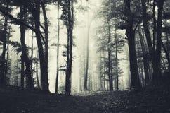 Djupa mörka trän med dimma fotografering för bildbyråer