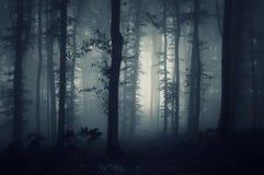 Djupa mörka trän med kuslig dimma Arkivbild