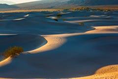 Djupa morgonskuggor mellan dyerna Arkivbilder