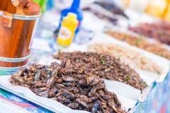 Djupa stekte kryp för äter, kuslig mat royaltyfri foto