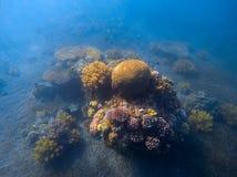 Djupblått havslandskap med korallreven under solljus Runt korallbildande med havsväxt Royaltyfri Foto