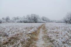 djupfryst äng Fotografering för Bildbyråer