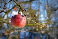 Djupfryst äpple Arkivfoton