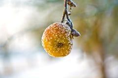 Djupfryst äpple i vintertid Arkivfoto