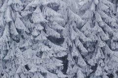 Djupfryst bakgrund för granträd Arkivfoto