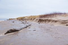 Djupfryst baltiskt hav och snö Folk och kallt väder Loppfoto 2019 royaltyfria bilder