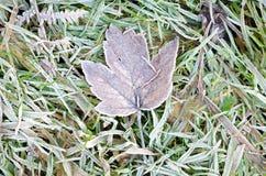 Djupfryst blad i djupfryst gräs Arkivbilder