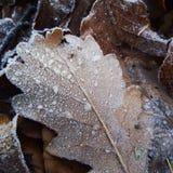 Djupfryst blad med den trevliga strukturen royaltyfria foton