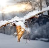 Djupfryst blad på trädet Royaltyfri Foto