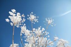 Djupfryst blomma på himmelbakgrunden arkivfoto