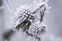 Djupfryst blomma som är berörd vid vinter arkivfoton