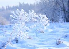 Djupfryst blomma som räknas med rimfrost Arkivfoton