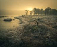 Djupfryst boreal skog i soluppg?ngljus royaltyfri foto
