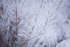 Djupfryst buske i mist Arkivfoton