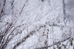 Djupfryst buske i mist Arkivbild