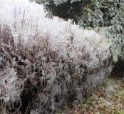 Djupfryst buske och iskallt regn Royaltyfri Fotografi