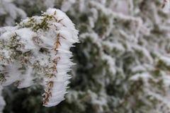 Djupfryst buskefilial under vinter Royaltyfri Bild