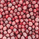 Djupfryst cranberrybakgrund arkivfoton
