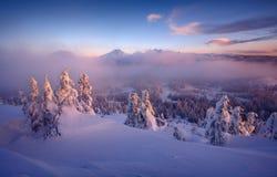 djupfryst dimmig morgon Arkivbilder